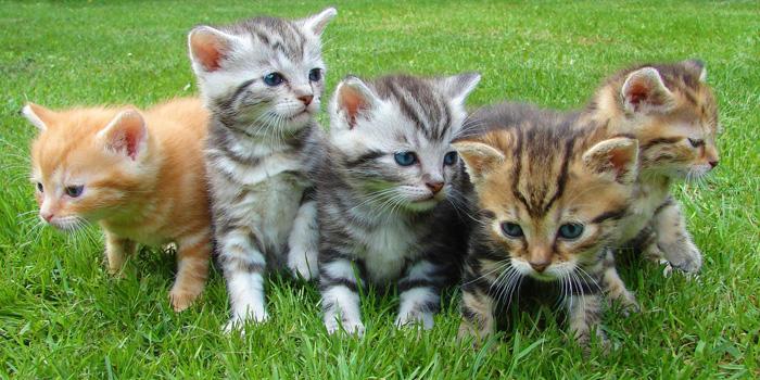 kittens-cat-cat-puppy-rush-45170-700
