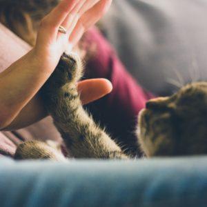 猫と手の画像