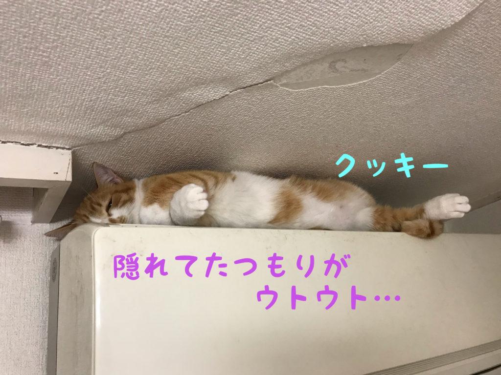 保護猫ハウス