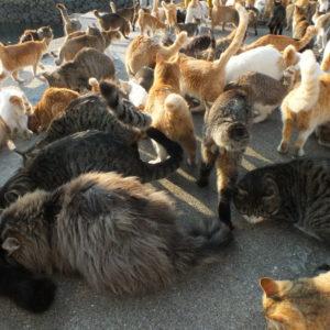 青島の猫画像