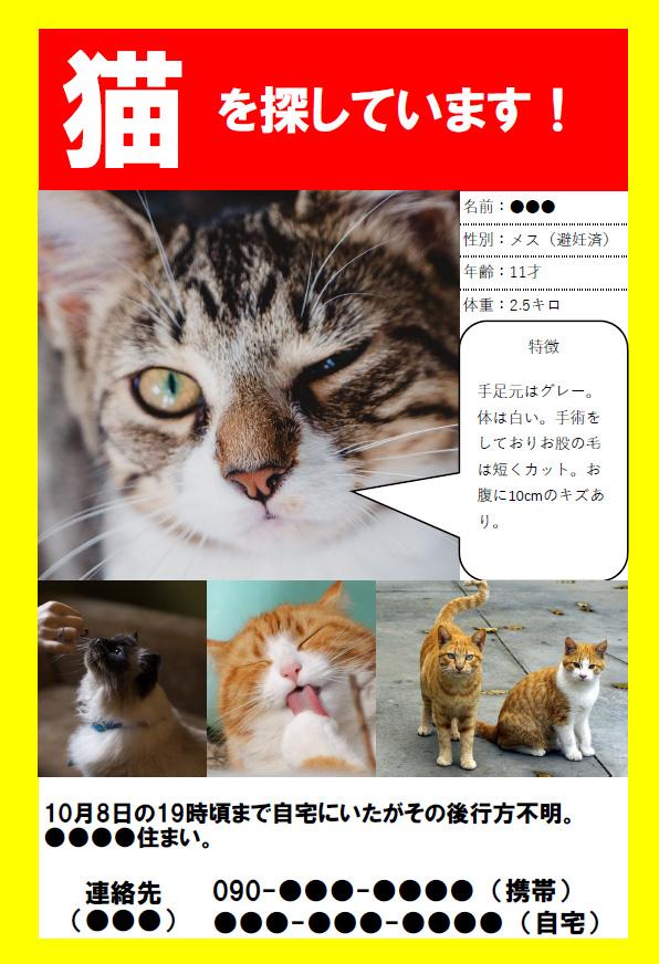 猫探しポスター