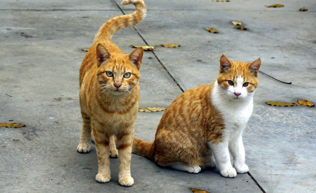 2匹の野良猫画像