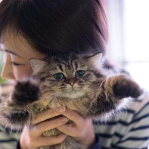 ねころび|猫と女性