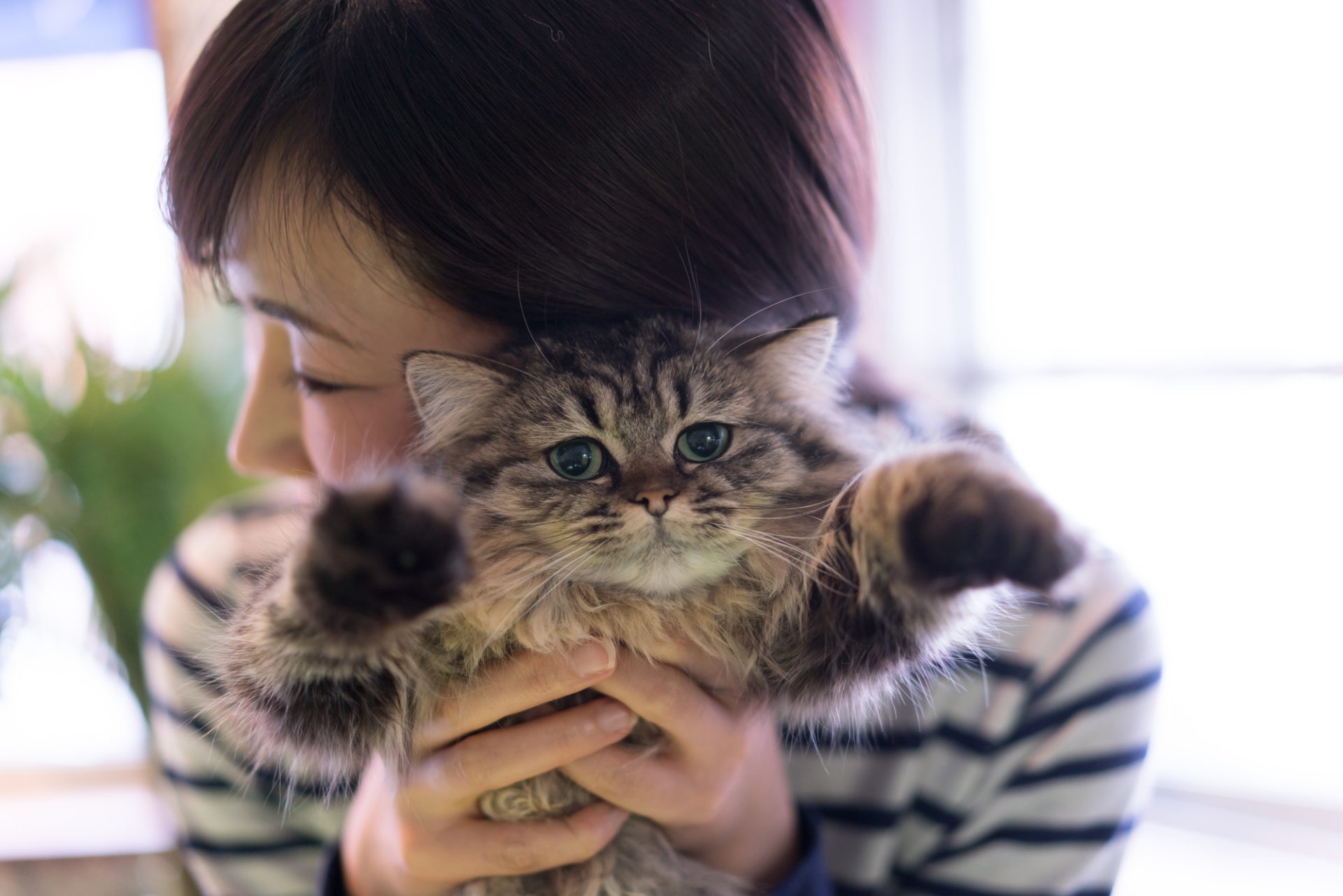 ねころび 猫と女性