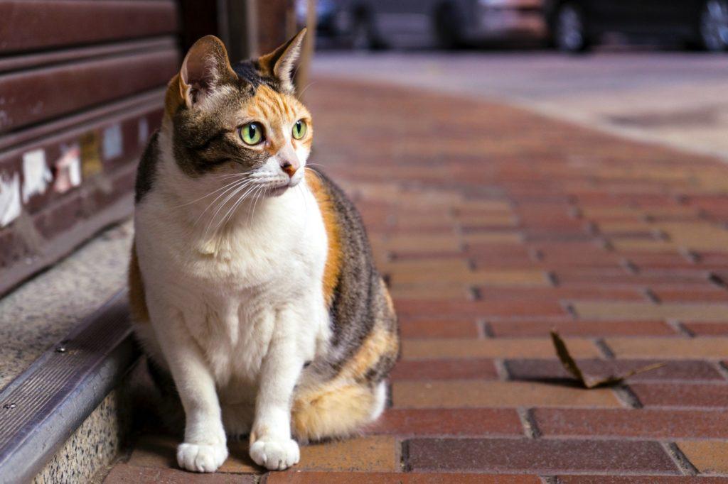 路上にいる猫の画像