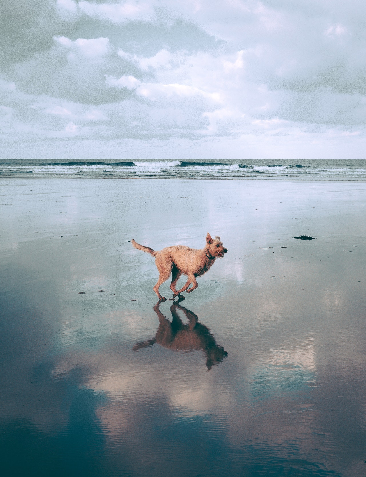dog-running-at-the-beach-2906033