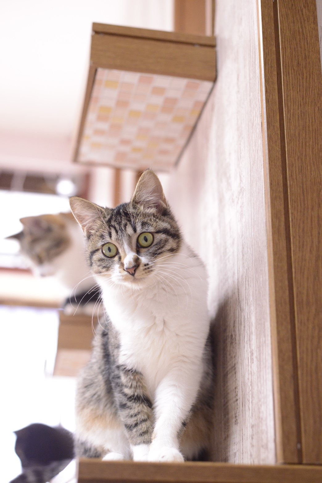 ねころばの猫たち