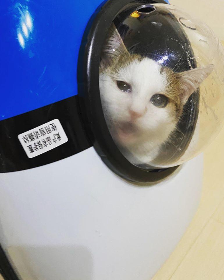 宇宙船キャリー|ねころび