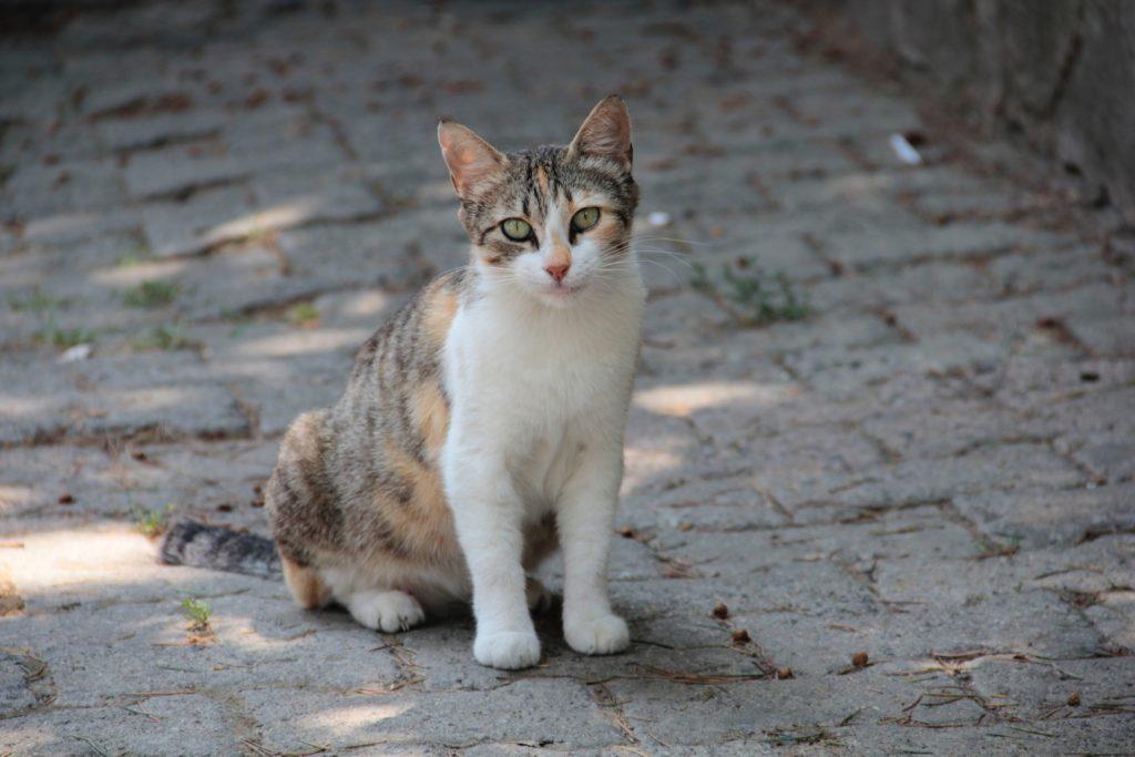 路上に座る猫の画像