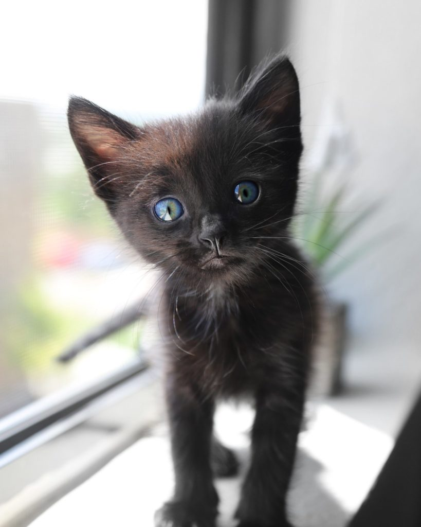 子猫の画像|ねころび