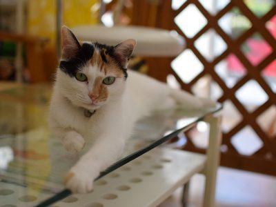 マーモさんちの猫