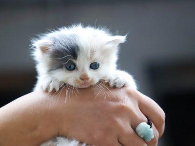 手の中の子猫画像