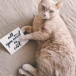 カードを持った猫の画像