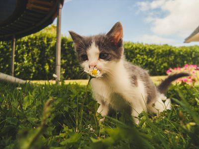 子猫と花の画像